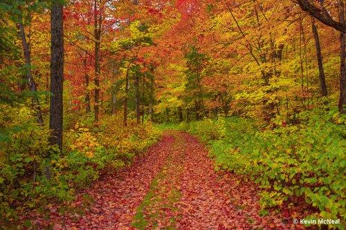 Fall Photography Fundamentals