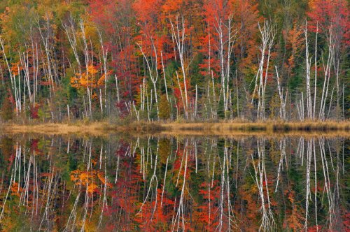 Get Ready For Fall Photography
