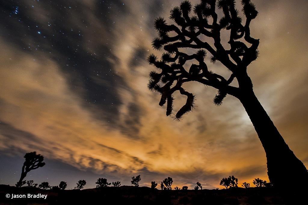 Beautiful Oddities Of Joshua Tree - Outdoor Photographer