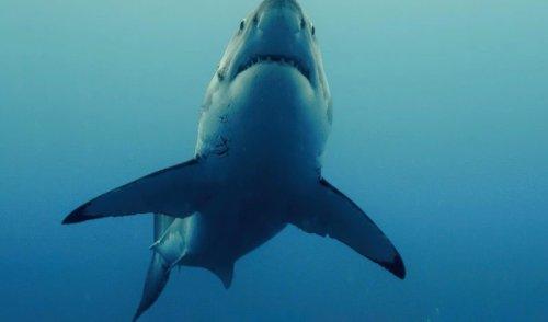 Quand les victimes d'attaques de requins surmontent leur traumatisme grâce à un groupe Facebook