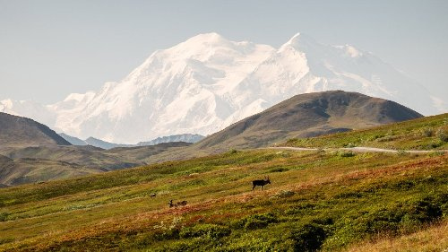 The Perfect Summer Day in Denali National Park
