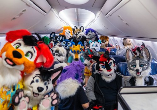 Furries On a Plane: Southwest Airlines Flight Taken Over By Animal Costumes