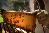 Peninsula beekeepers divided on the best way to fight a plague