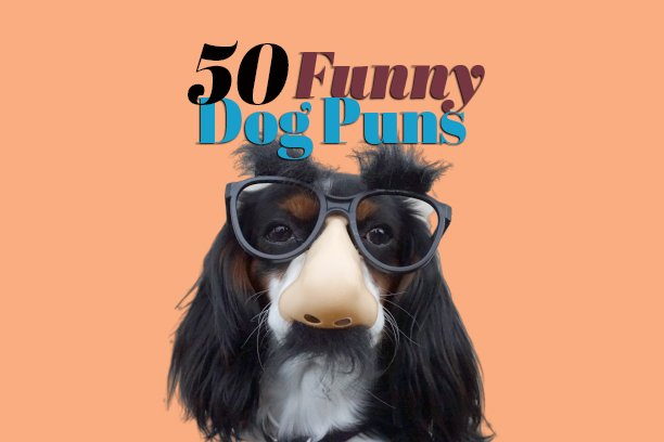 Anything is Paw-sible With These 50 Funny Dog Puns Sure to Leave You Howling