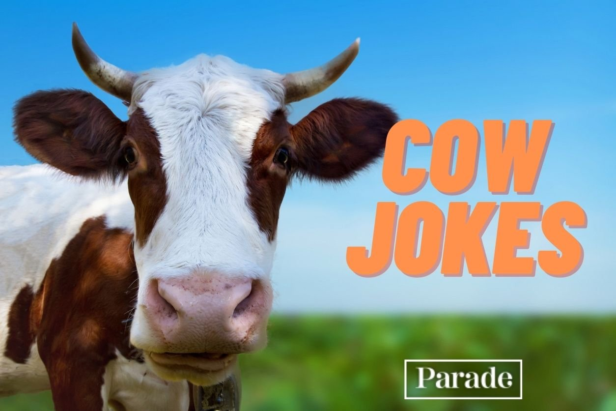 Get Ready to Be A-MOOOO-sed! These 101 Cow Jokes Are Udderly Hilarious