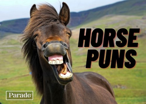 We're Not Horsing Around! These 35 Horse Puns Are So Good, They'll Become Mane-Stays in Your Stable of Jokes in No Time
