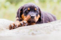 Discover a dog