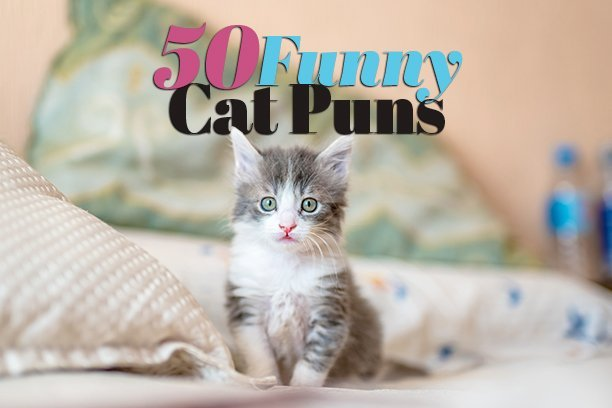 50 Purr-fectly Funny Cat Puns To Try When You Feel Like Kitten Around