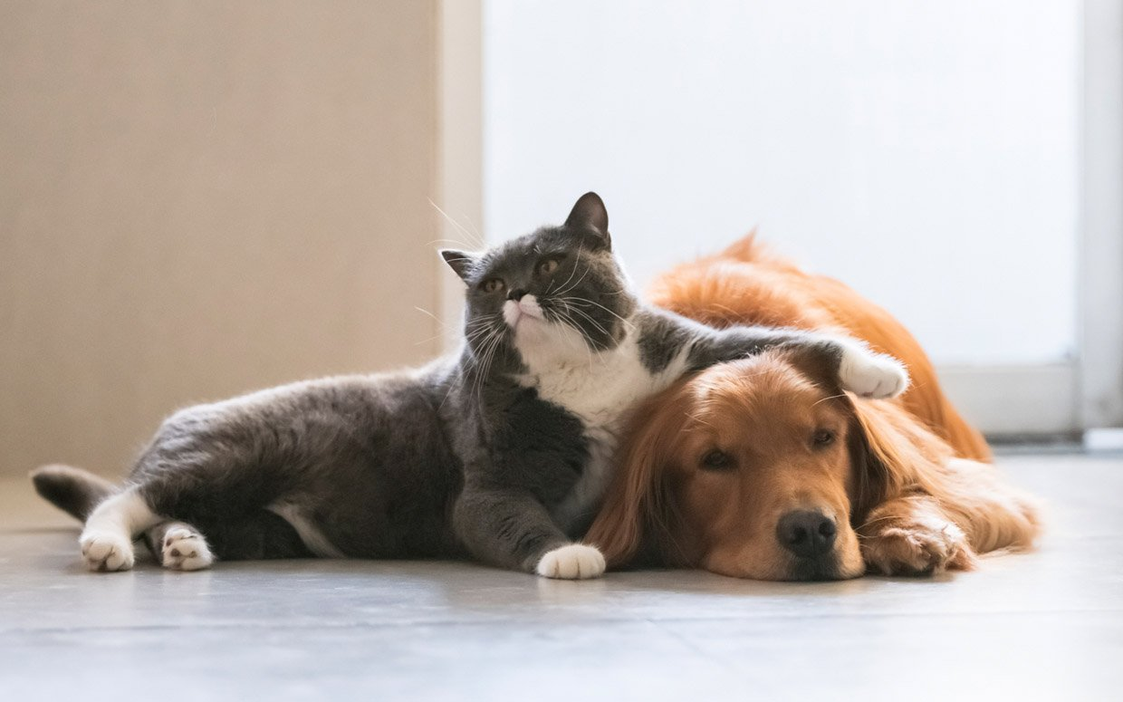 Why Are Dogs More Scared of Storms Than Cats?