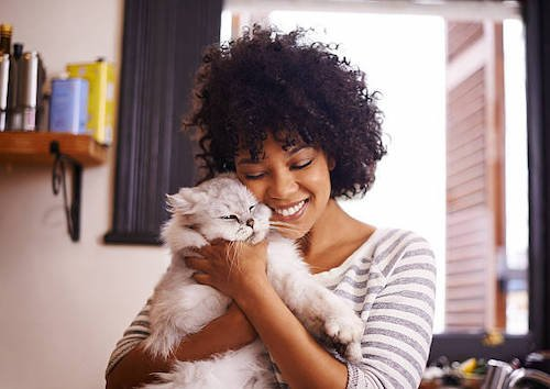 10 Most Loving Cat Breeds - cover
