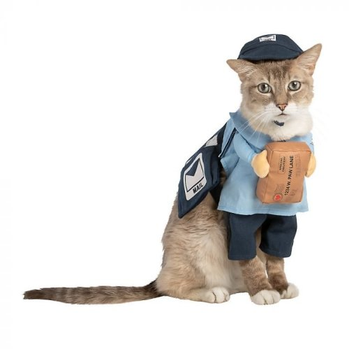 35 Hilarious Halloween Costumes for Your Cat