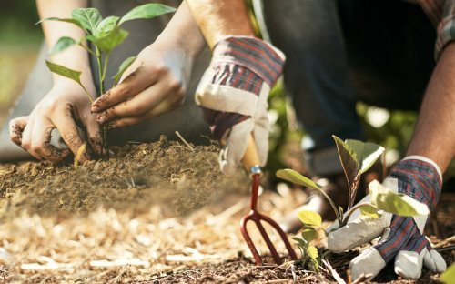 Is Not Wearing Gloves While Gardening Healthy?