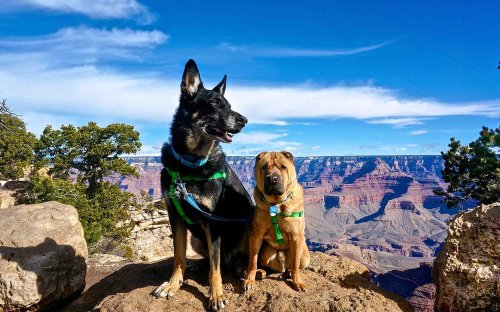 10 Dog-Friendly Travel Destinations You Don't Want to Miss