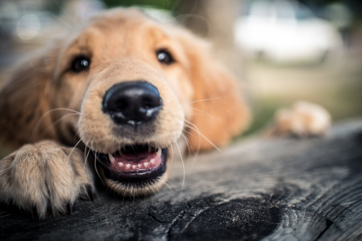 New Puppy in the Family? These 250 Girl Dog Names Are Absolutely Off the Leash