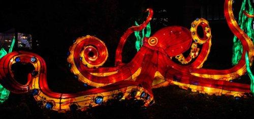 Le Festival des Lumières du Jardin des Plantes sera encore plus féérique cette année