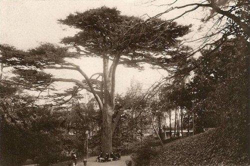 La fascinante histoire de l'arbre de 300 ans du Jardin des plantes