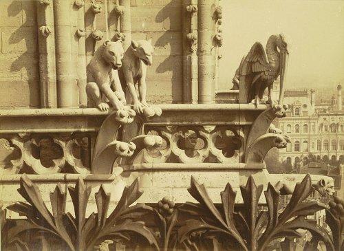 Pourquoi le toit de Notre-Dame est-il peuplé d'étranges créatures ?