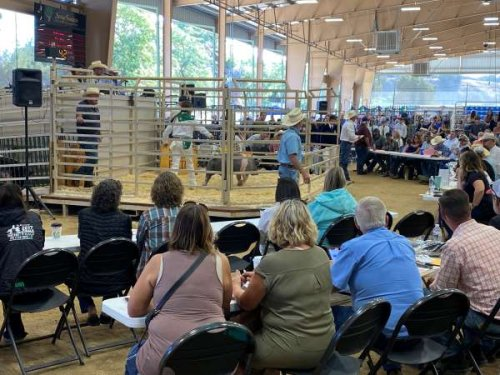 Community turns out to support junior livestock auction