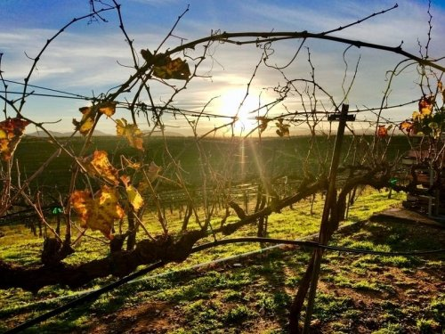 North Bay Wine Regions Nominated For '10 Best' In USA Today