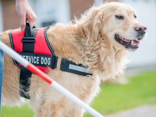 Visually Impaired Residents Have New Allies: Dogs