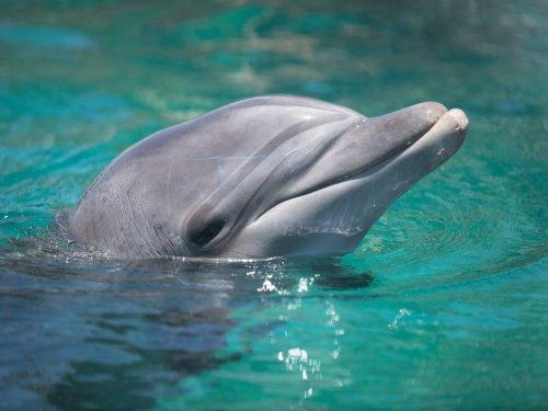 Group Protests 'Animal Captivity' At Sea World San Diego