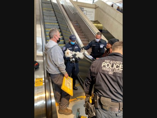 All Paws On Deck: Jersey City Pup Rescued From PATH Escalator