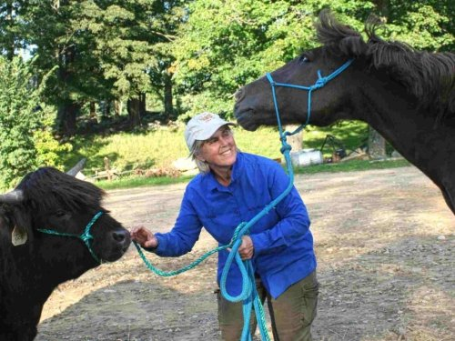 Soule: Horses Will Flee; Cattle Can Fight