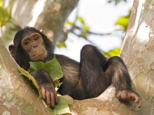 Missing Monkeys In Cincinnati? Police Go Bananas Solving Mystery