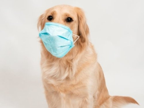 COVID-Sniffing Dog Joins Team At Doctors Hospital Of Sarasota