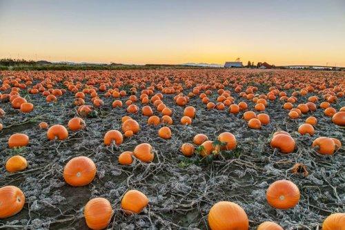 Popular Temecula Area Pumpkin Patches