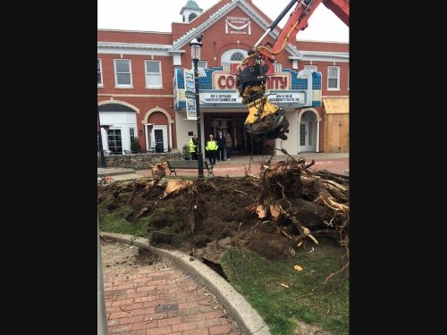 'I Was In Shock': Fairfield Cherry Trees Removed; Lawsuit Filed