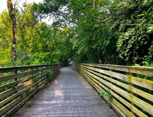 Outgoing Dallas City Council Adopts Urban Forest Master Plan
