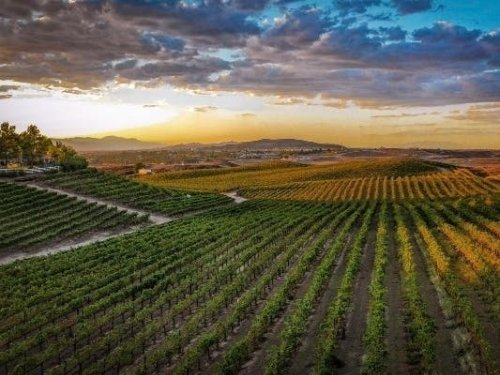 Temecula Valley Wine Country Nominated For '10 Best' In USA Today