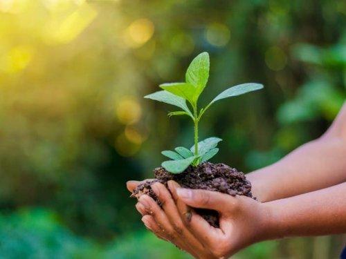 County Supervisors OK Sustainability, Native Plant Policies