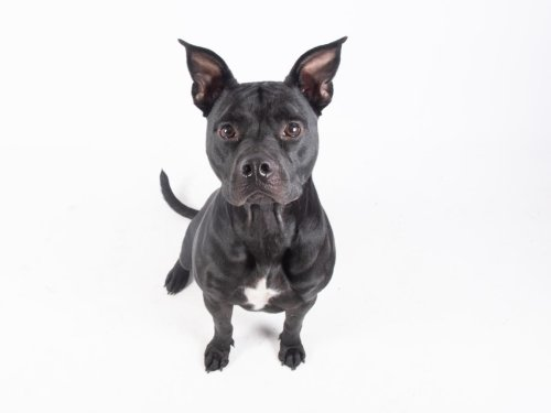 Meet LifeLine's Fulton County Animal Services Pet of the Week!
