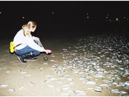 Grunion Run In San Clemente: Look, Don't Touch This Month
