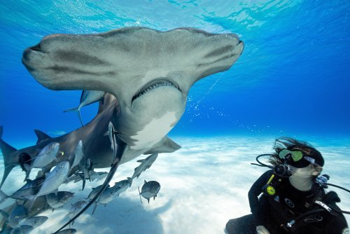 Meet the women diversifying shark science