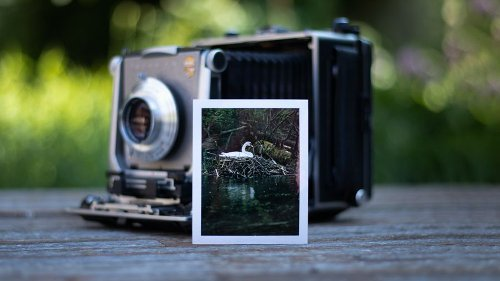 Photographing wildlife with 4x5 large format camera and expired film - DIY Photography