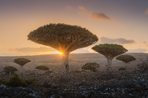 Photos show Socotra, Yemen is the most beautiful place you've probably never seen - DIY Photography