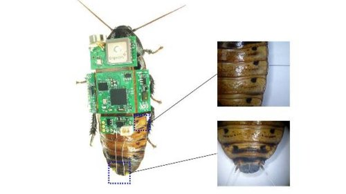 This cockroach is actually a tiny search and rescue camera - DIY Photography
