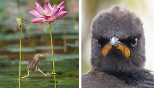 Take a break and laugh at some of the best entries of 2021 Comedy Wildlife Photography Awards - DIY Photography