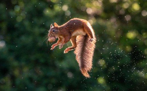 These photos of jumping squirrels with nuts will put a huge smile on your face - DIY Photography