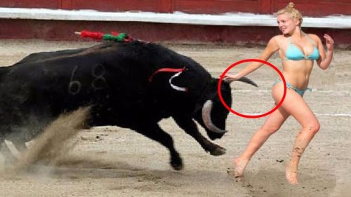 Awesome BullFighting Festival : Best Funny bits , Please try not to Laugh