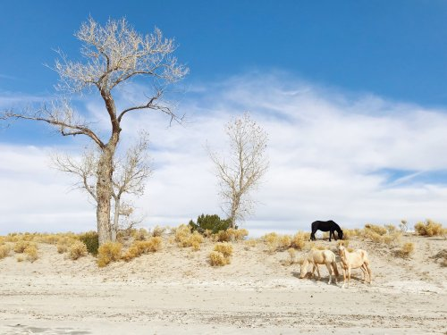 New Mexico by Maddy Minnis - Pellicola Magazine