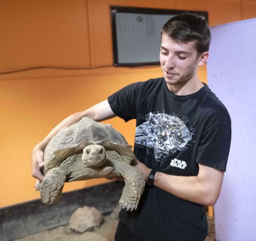 Owners shell out for baby tortoises, dump them when they grow up