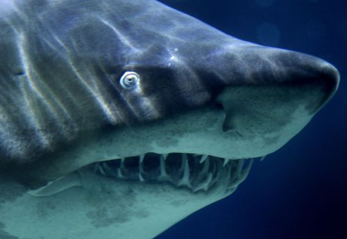 Pa. girl possibly bitten by shark while on vacation