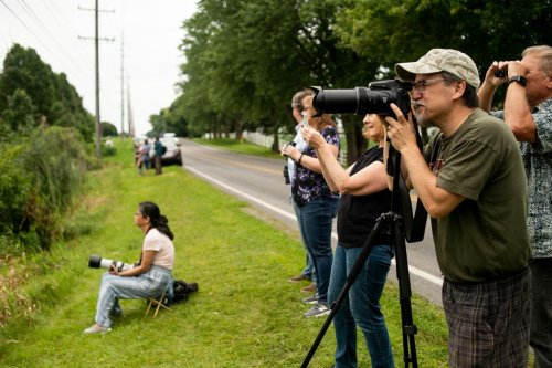 Rare pink bird continues to draw a crowd in Michigan hoping to catch a glimpse