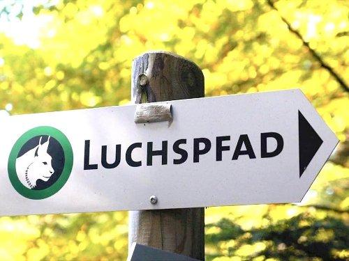 Wanderung auf dem Luchspfad im Schwarzwald