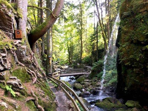 Menzenschwander Geißenpfad im Schwarzwald