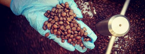 Using Roast Curves To Guide The Coffee Roasting Process